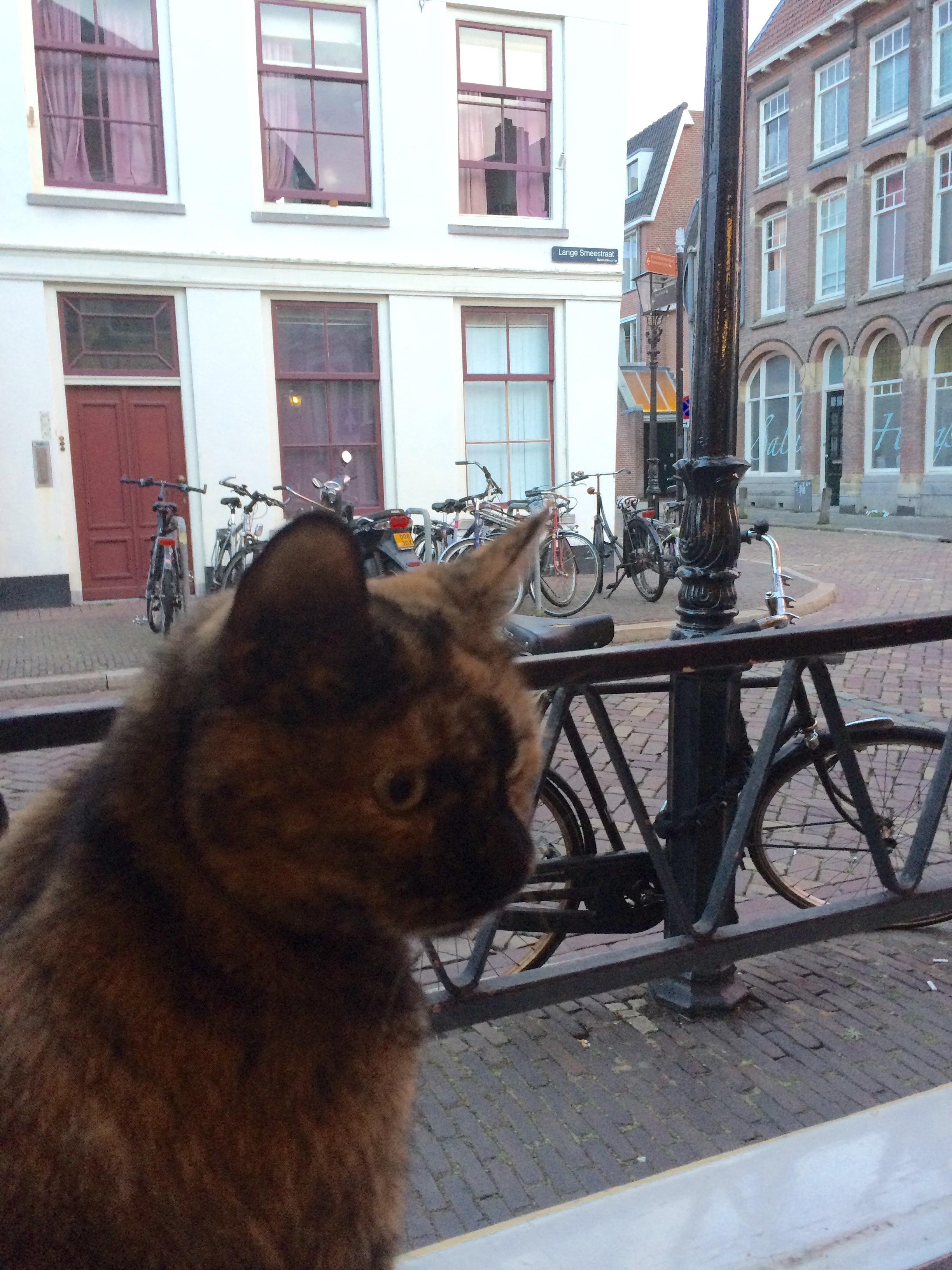 Cat, Cafe Derat, Utrecht, the Netherlands