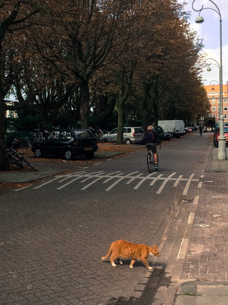 Cat and biker in Amsterdam, the Netherlands
