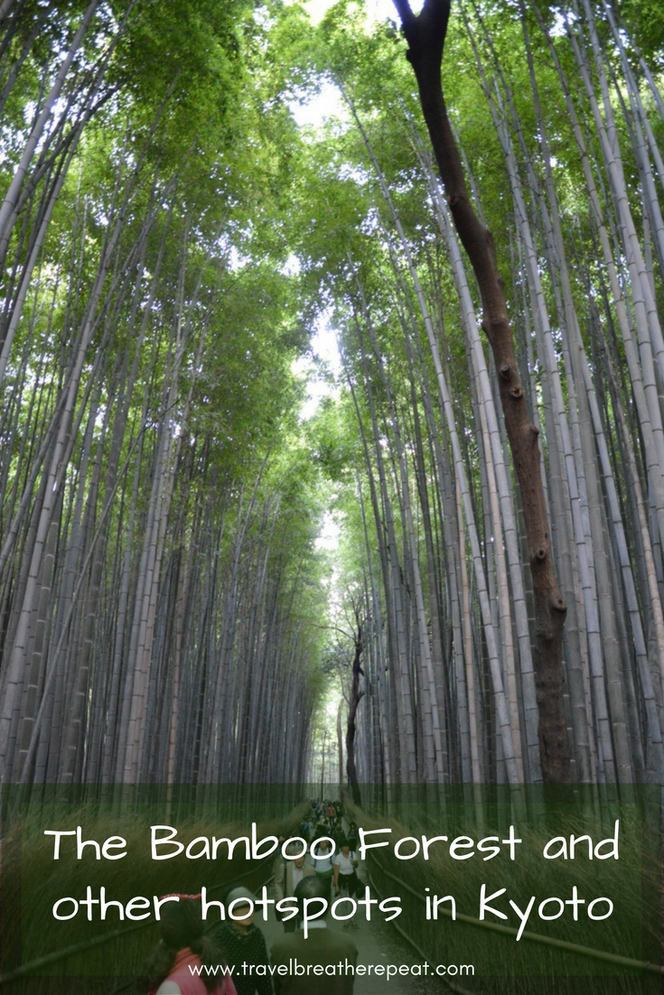 The Bamboo Forest and other hotspots in Kyoto, Japan