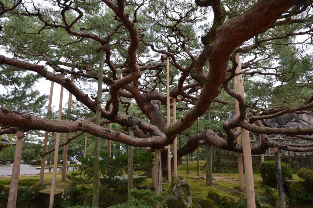 Kenroku-en Garden, Kanazawa, Japan