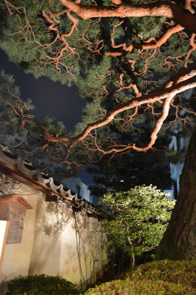 Tree outside Jazz Spot, Kanazawa, Japan
