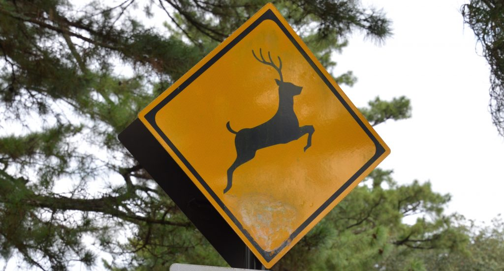 Deer crossing sign, Nara, Japan