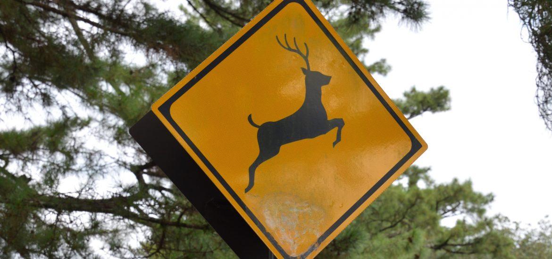 Deer crossing sign, Nara, Japan