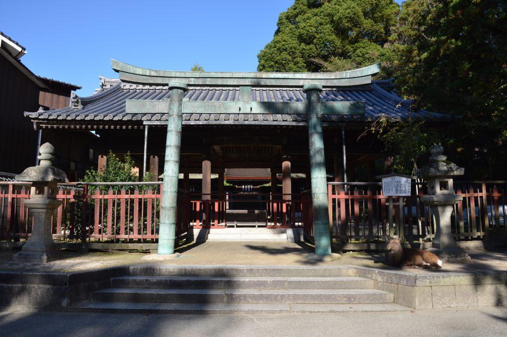 Deer and shrine in Miyajima
