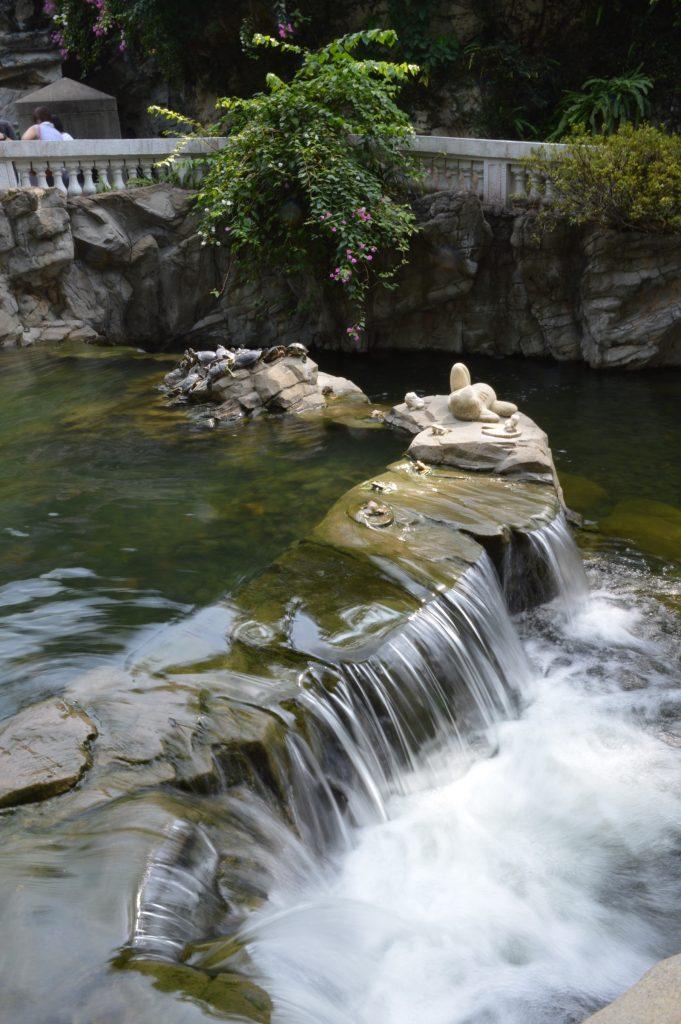 Terrapins in Hong Kong Park