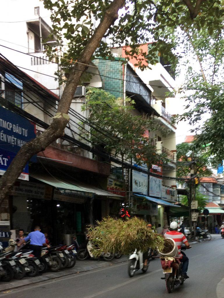 Motorbike with tree, Hanoi, Vietnam