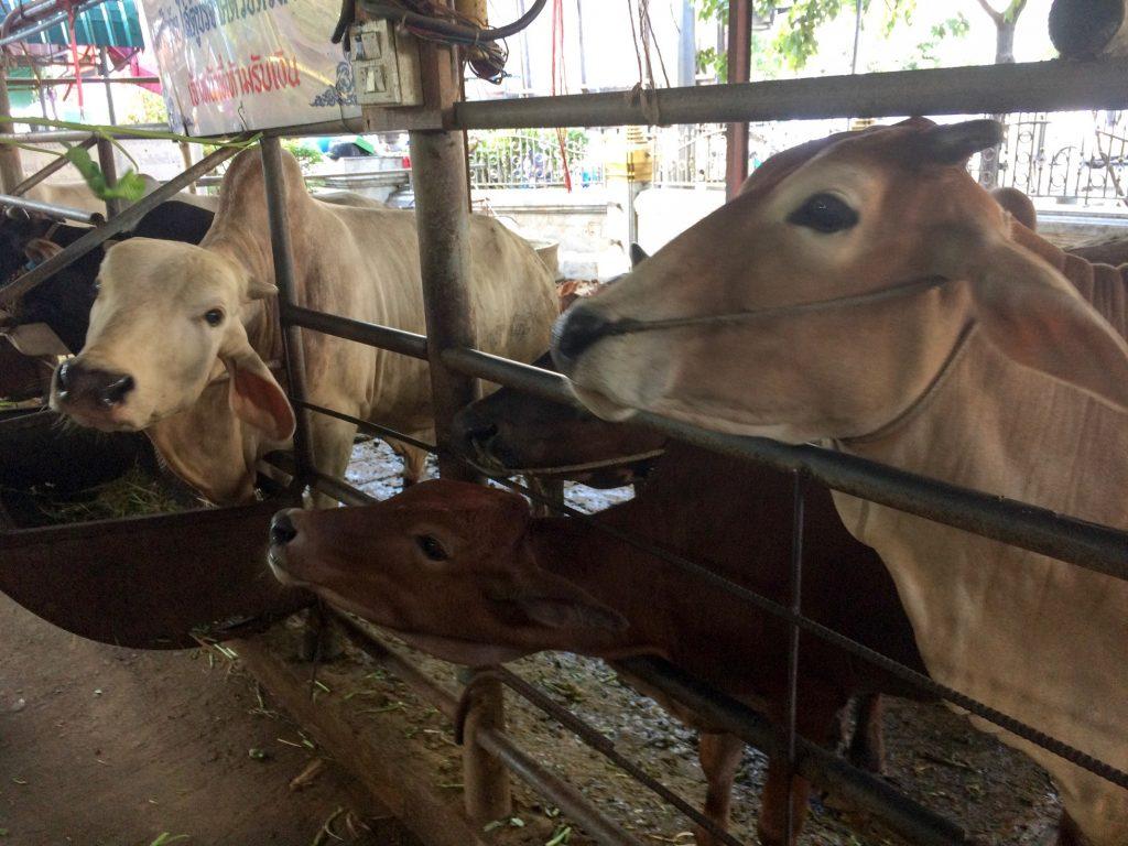Petting zoo at Wat Hua Lam Phong, Bangkok, Thailand