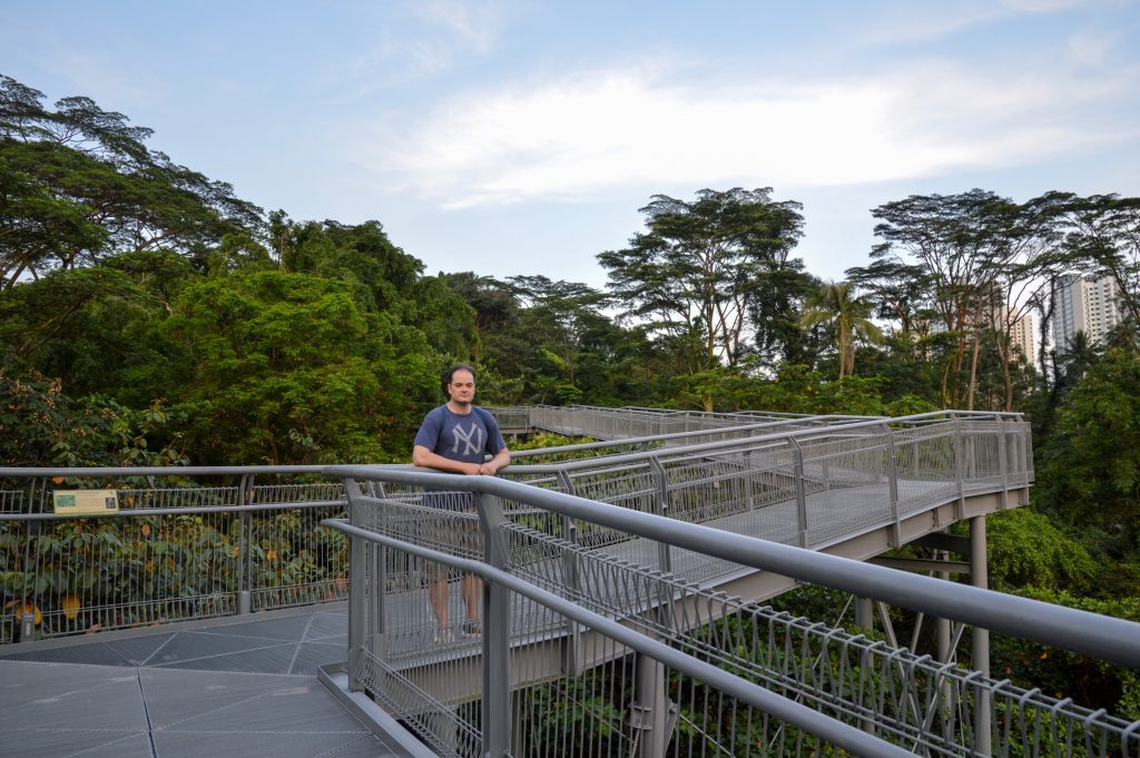 The Forest Walk, Southern Ridges, Singapore