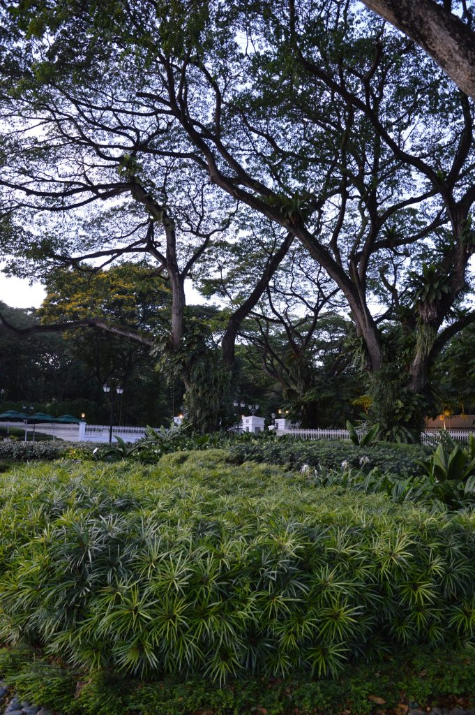 Civic District Tree Trail, Singapore