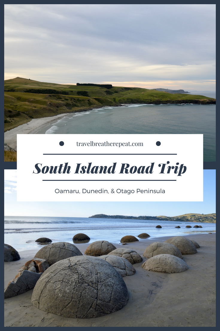 South Island New Zealand road trip: Oamaru, Dunedin, and the Otago Peninsula; things to do in New Zealand; #newzealand #southisland #roadtrip #travelinspiration #traveling