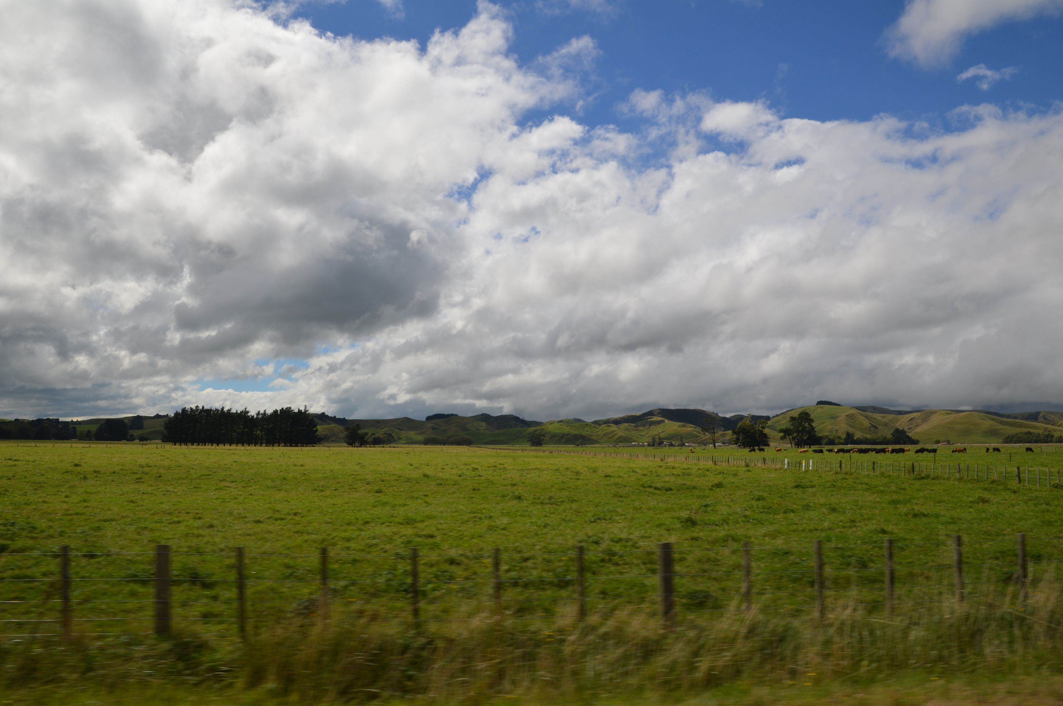Driving from Taradale to Martinborough, New Zealand