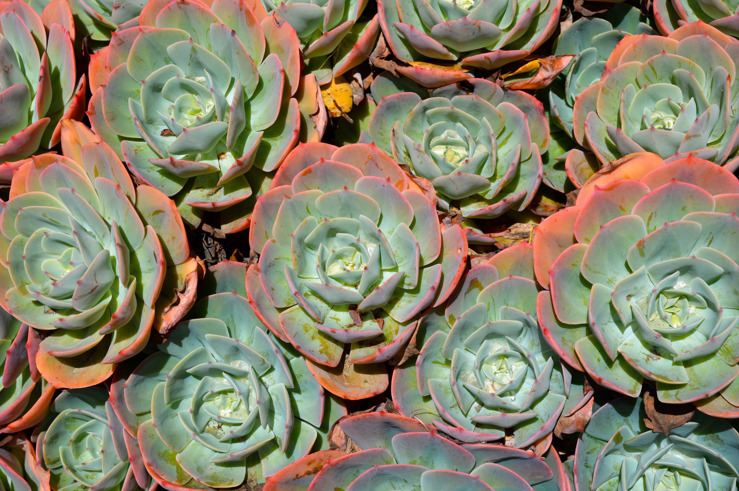 Wellington Botanic Garden, New Zealand