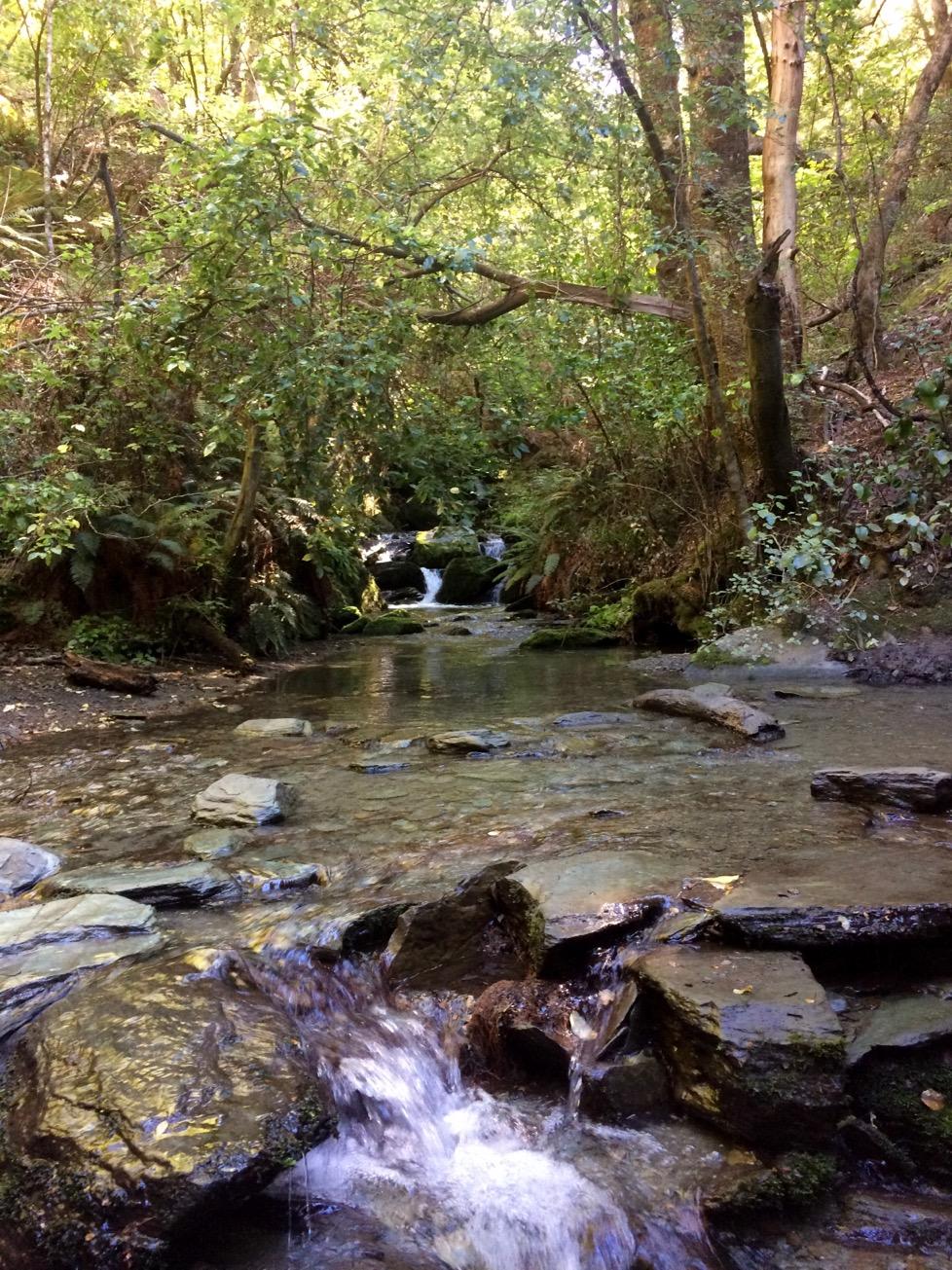 Bush Creek Trail, Arrowtown, New Zealand