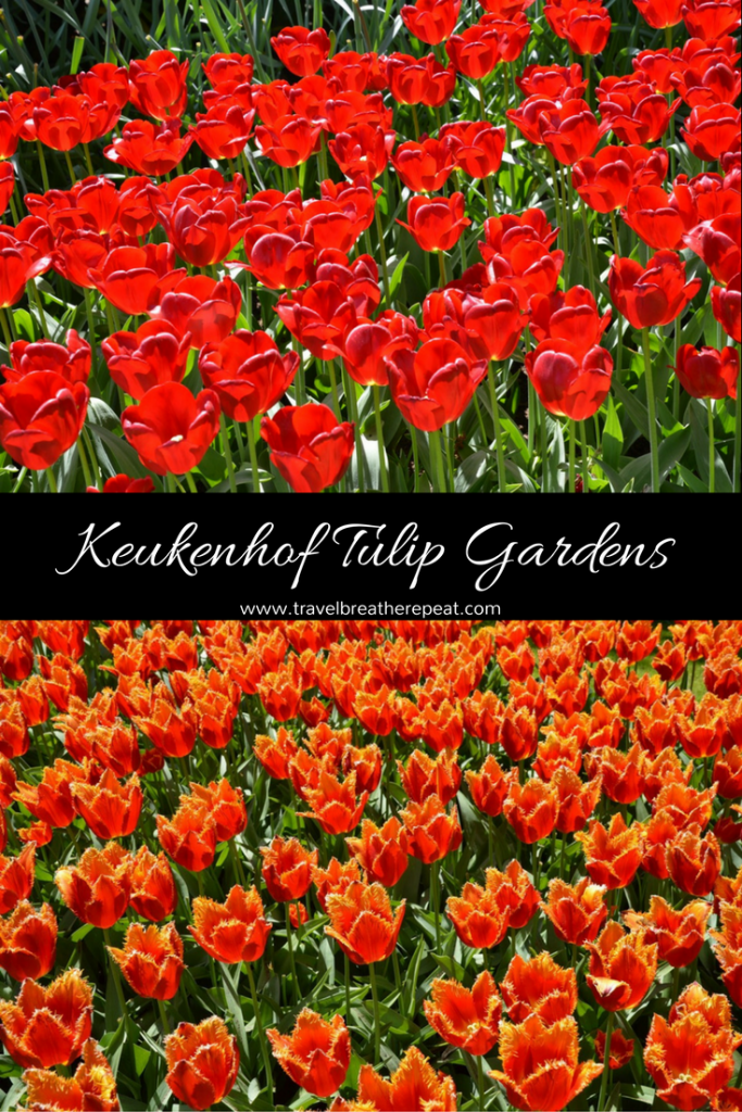 Inspiration and tips for going to visit the Keukenhof gardens in the Netherlands; pictures of tulips at Keukenhof gardens; #keukenhof #netherlands #tulips #dutchtulips