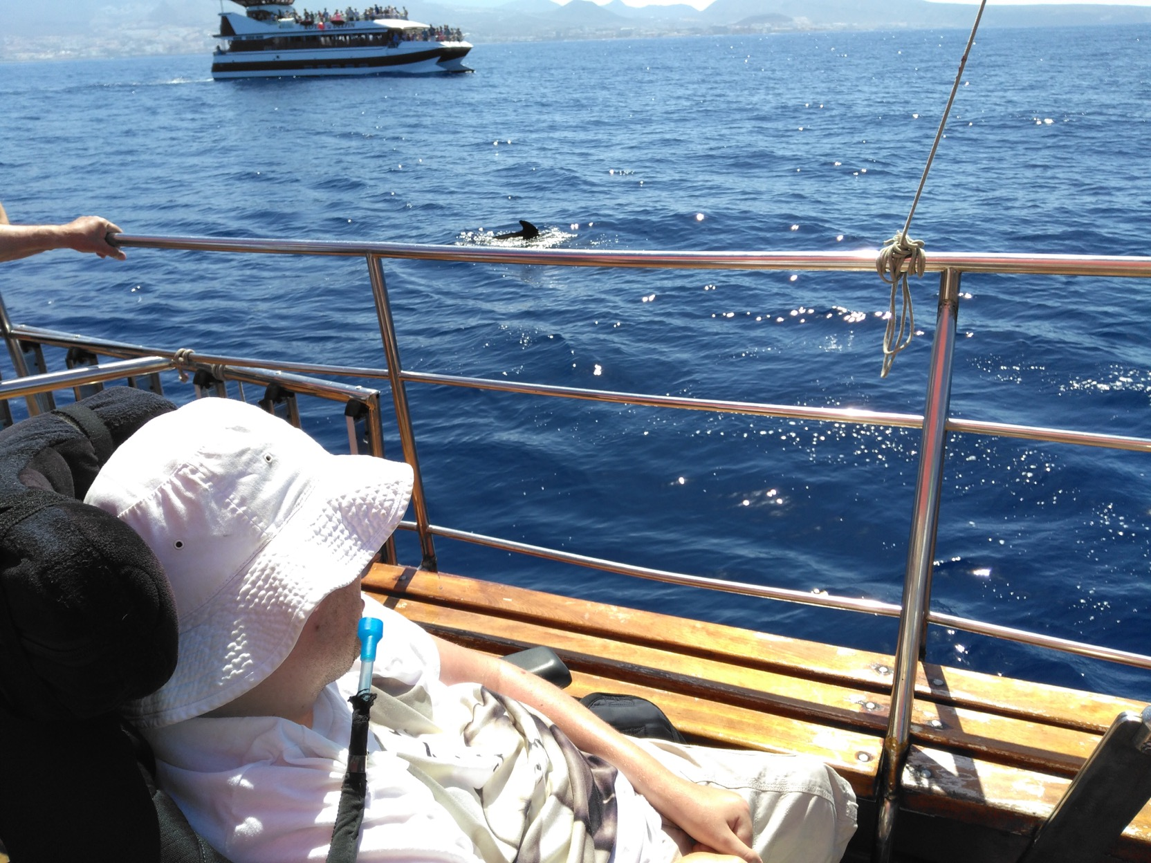 Wheelchair accessible things to do in Tenerife: dolphin watching